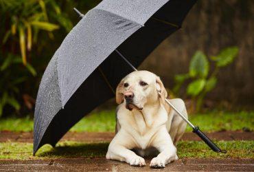 Часть Украины предупредили о непогоде: кому грозят значительные дожди