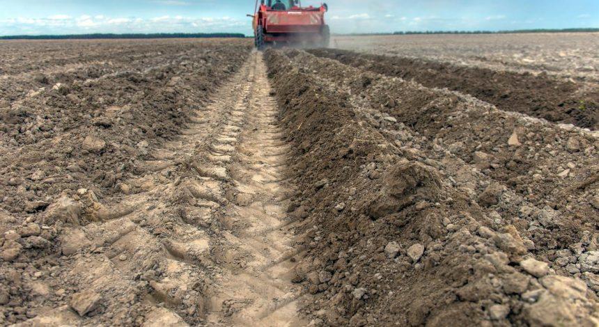 Часть украинских аграриев получат дотации: кто и на какую сумму может рассчитывать