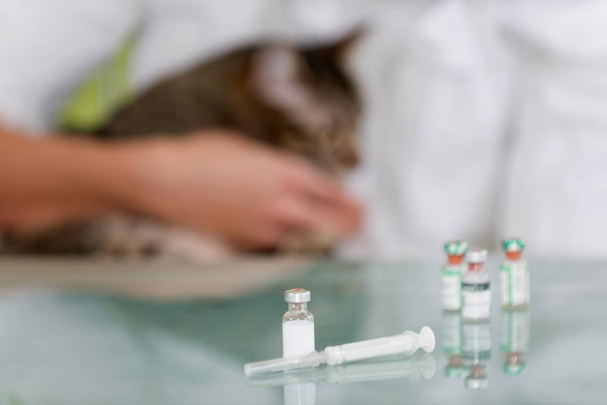 Зоопарк в Окленде, штат Калифорния, начал вакцинацию от коронавируса животных / фотоua.depositphotos.com