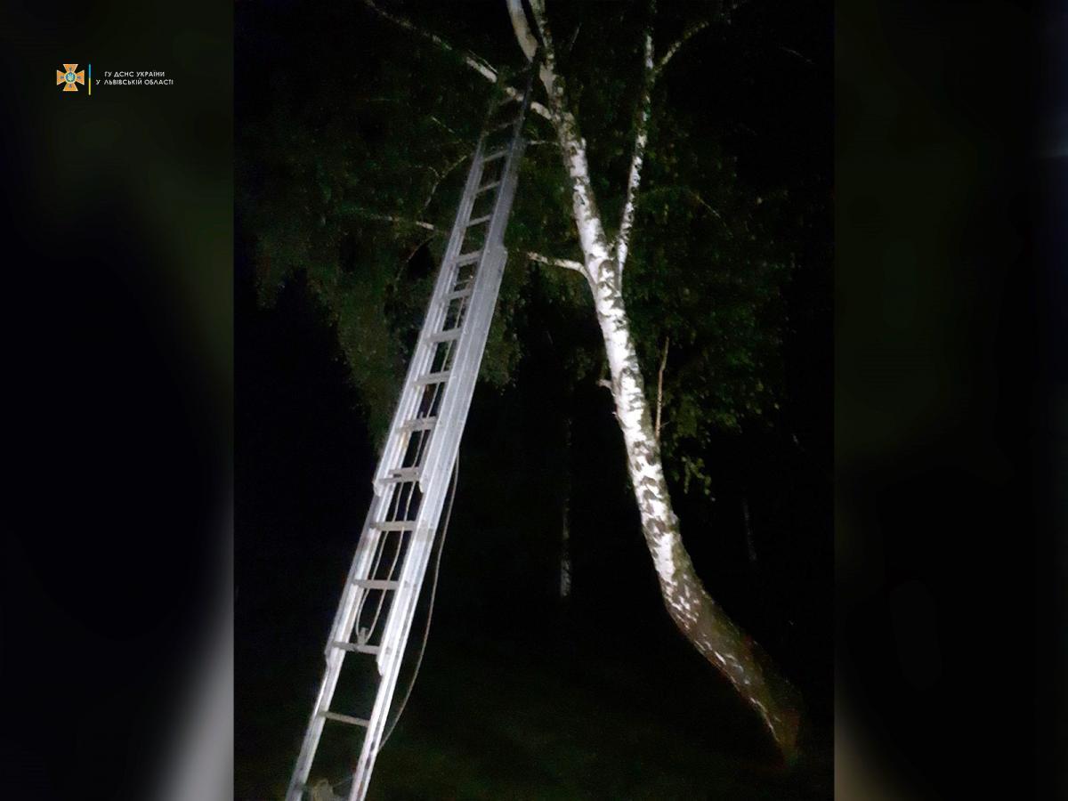 На Львовщине ребенок спрятался от буллинга на дереве / ГСЧС