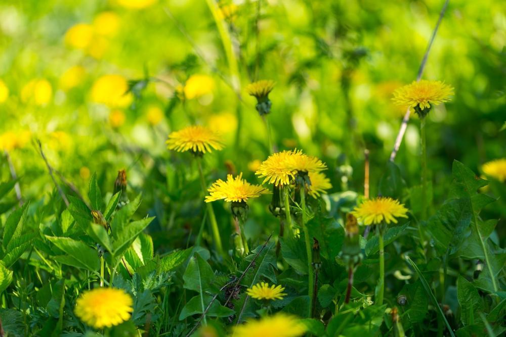Приметы 27 июля / фото ua.depositphotos.com
