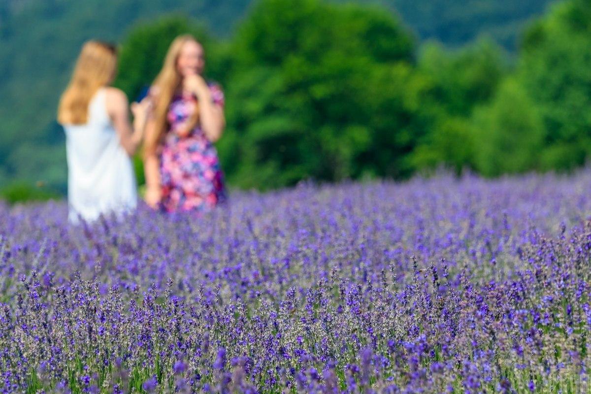 Живописное лавандовое поле цветет на Закарпатье / фото УНИАН, Янош Немеш