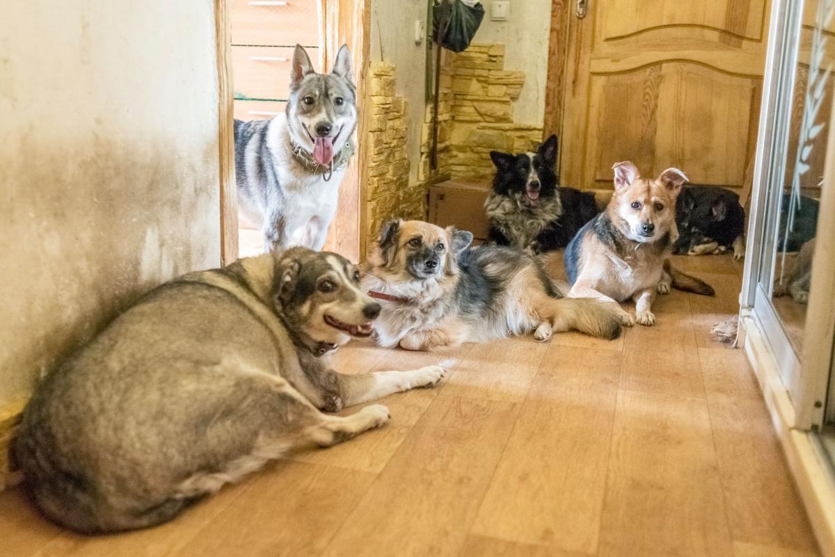 Без помощи людей животные обречены на голодную смерть / фото - facebook.com/AnimalShelterKiev