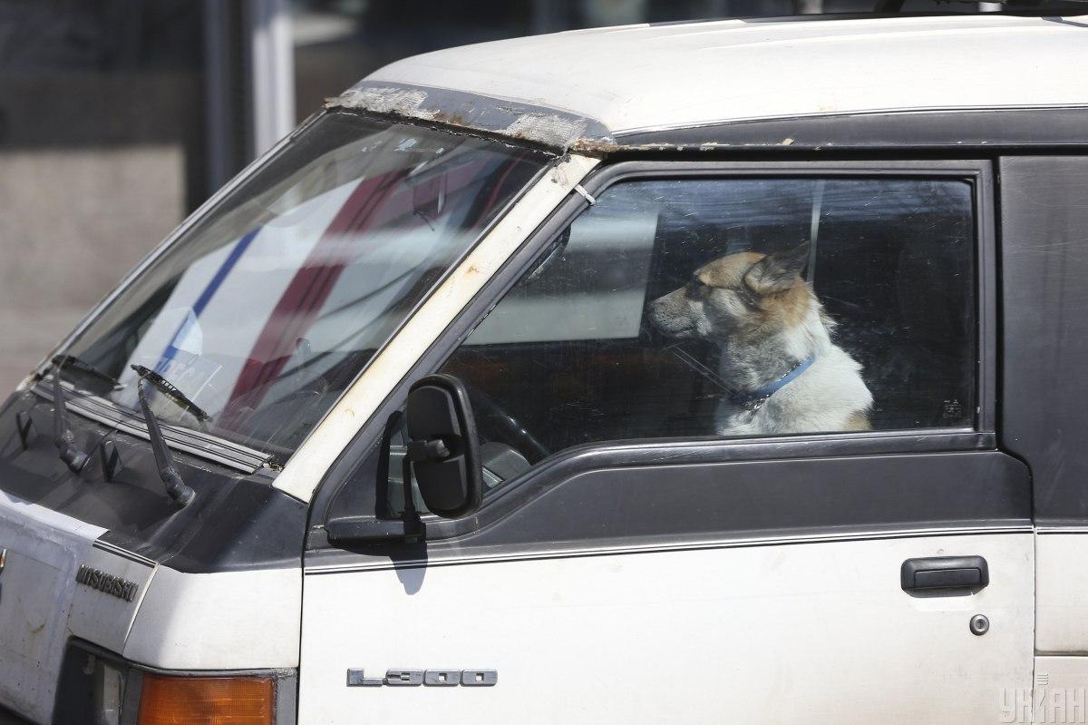 Новий закон забороняє залишати тварин самих узакритому авто при температурі повітря більше +20ºС / фото УНІАН, Володимир Гонтар