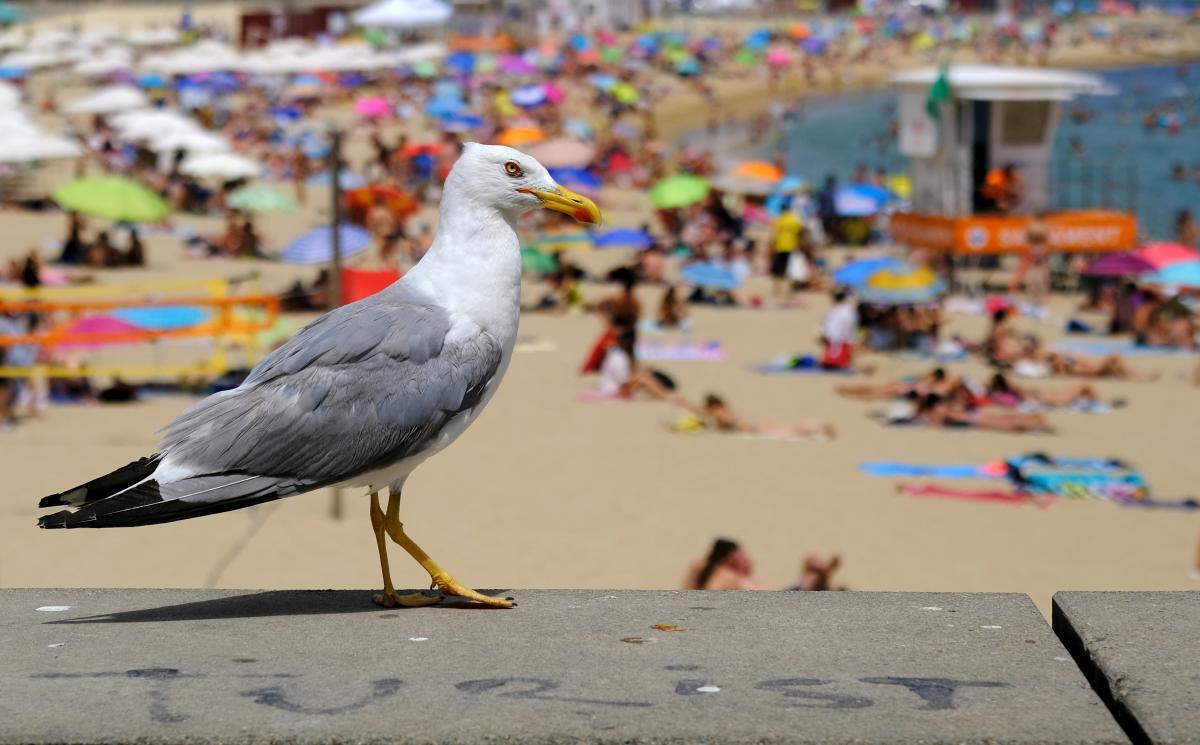Отдохнуть на пляжах Хорватии теперь можно будет проще/ фото REUTERS