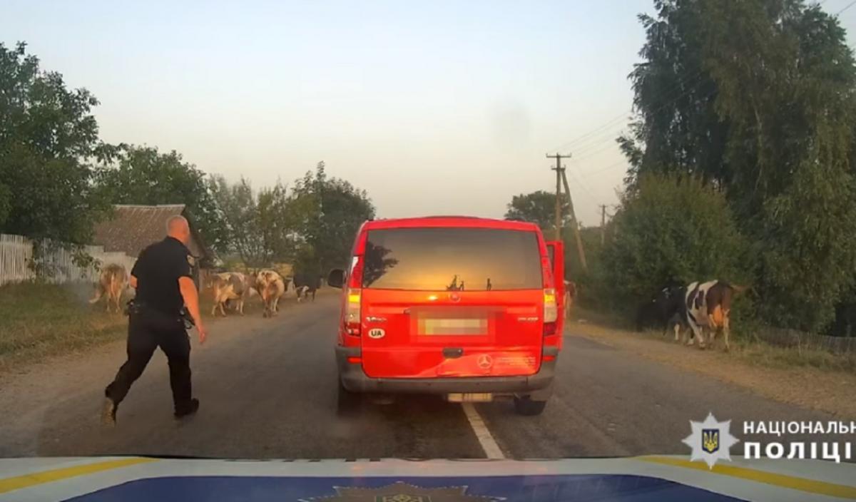 Правоохранители гнались за нарушителем с самого Новоград-Волынского / скриншот