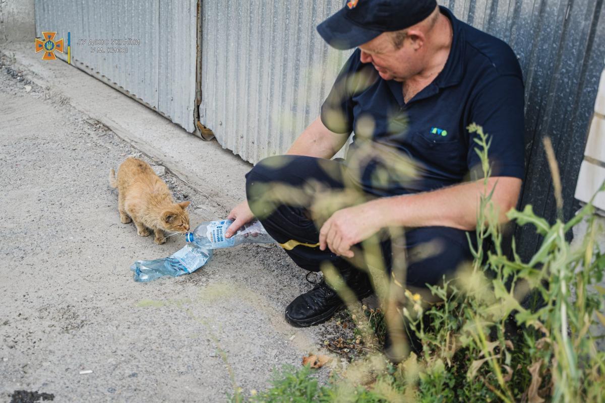 Кота напоїли/ фото УНІАН