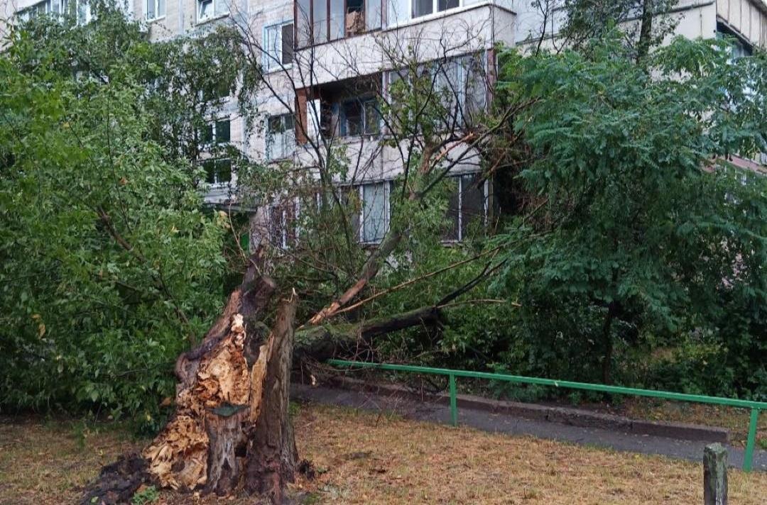 Упавшее в Киеве дерево / фото - facebook.com/KyivOperativ