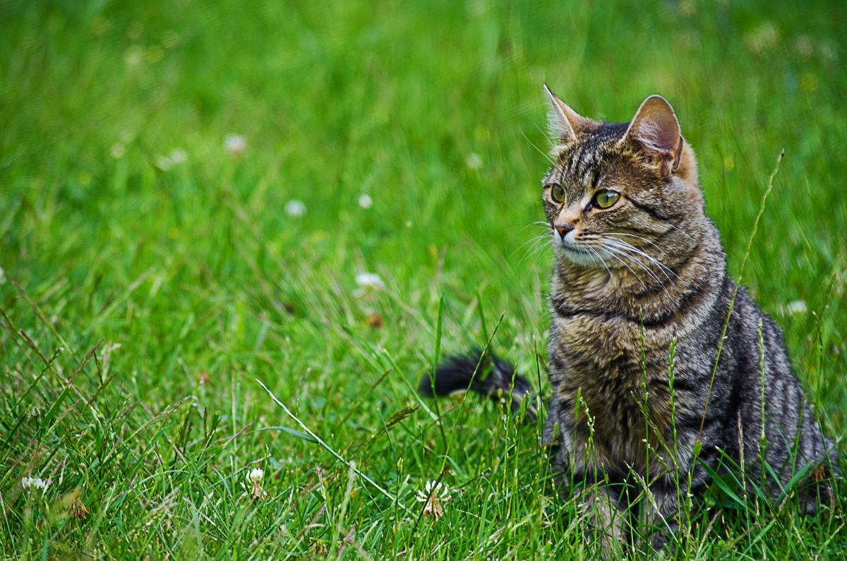 Мужчина убил 9 котов / фото ua.depositphotos.com