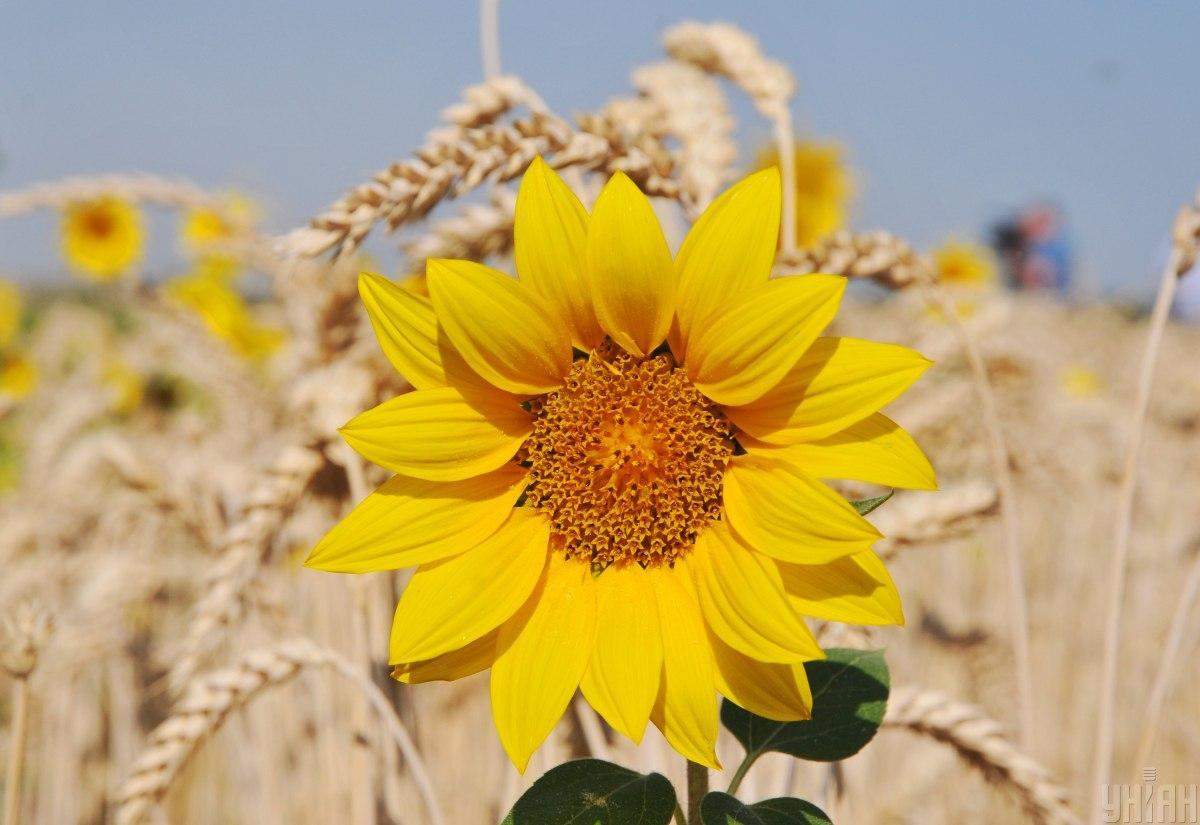 Серпень цього року буде спекотним / фото УНІАН