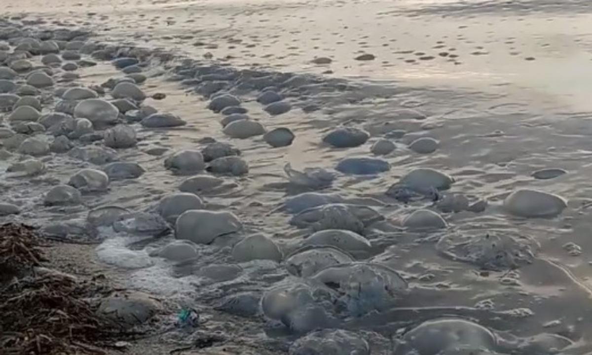 Эко-активист заснял тысячи медуз на побережье / скриншот извидео