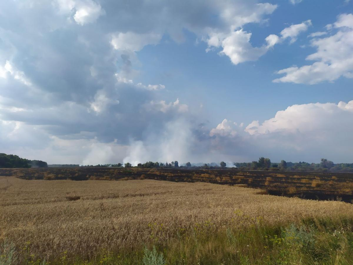 Поле в Чернігівській області повністю згоріло / фото ДСНС