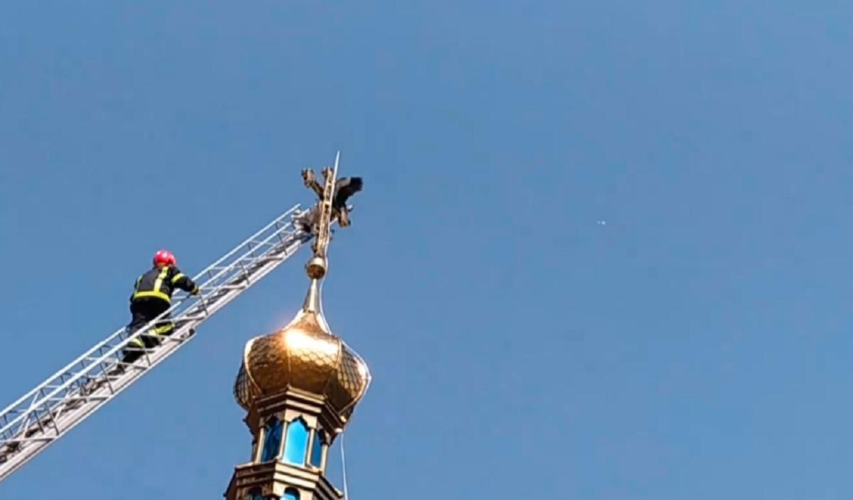 На Хмельнитчине аист застрял на церковной бане / скриншот