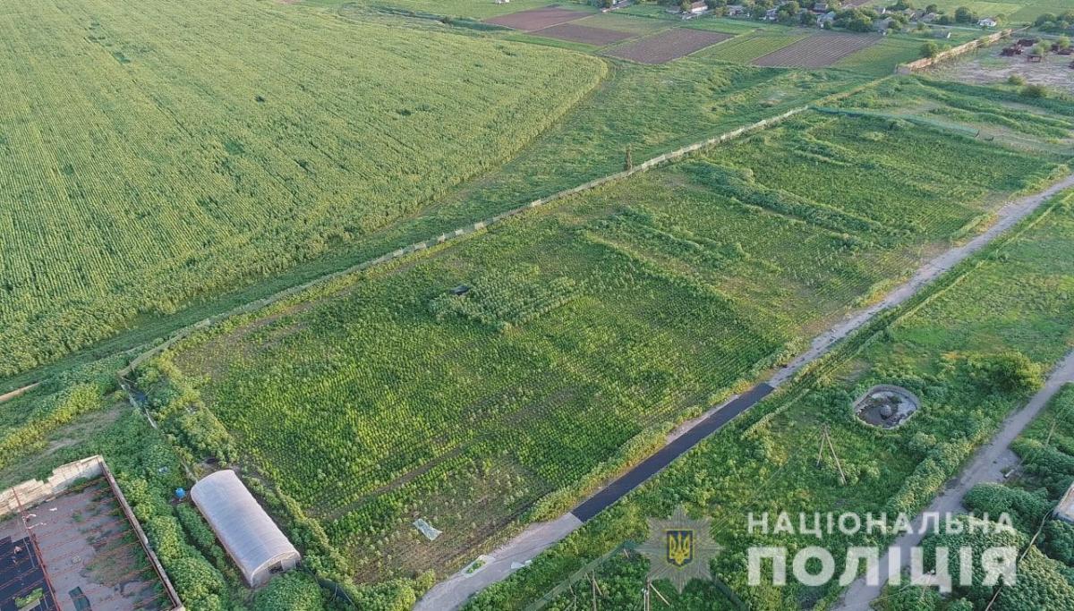 Наркоплантация располагалась на территории разрушенной птицефабрики вблизи села Преображенка / фото Национальной полиции