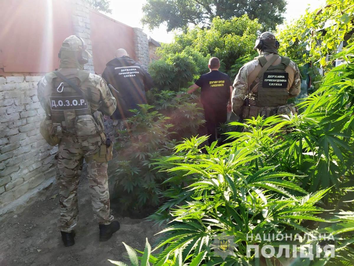 Правоохранители нашлиплантацию элитнойконопли / фото полиция Одесской области
