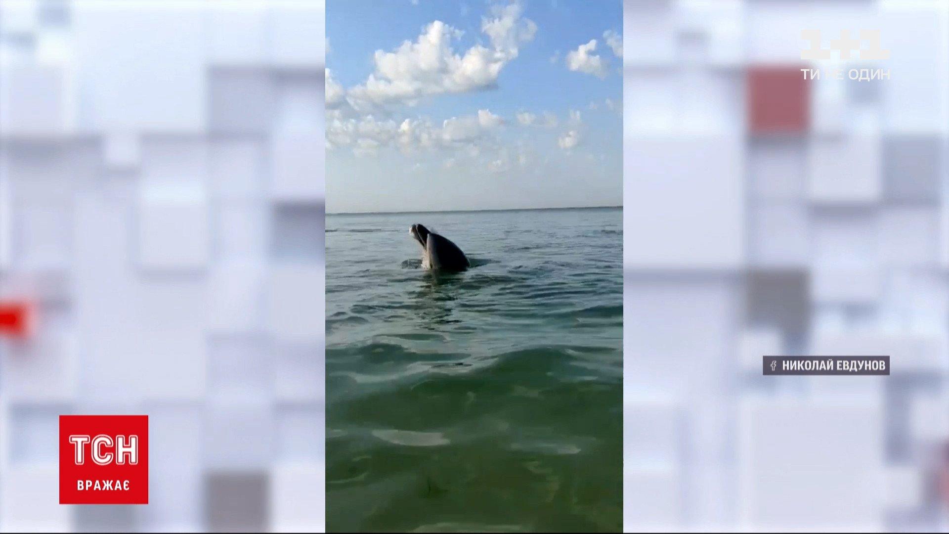 Компанія дельфінів припливаєпросто до самісінькогоберега/ скріншот