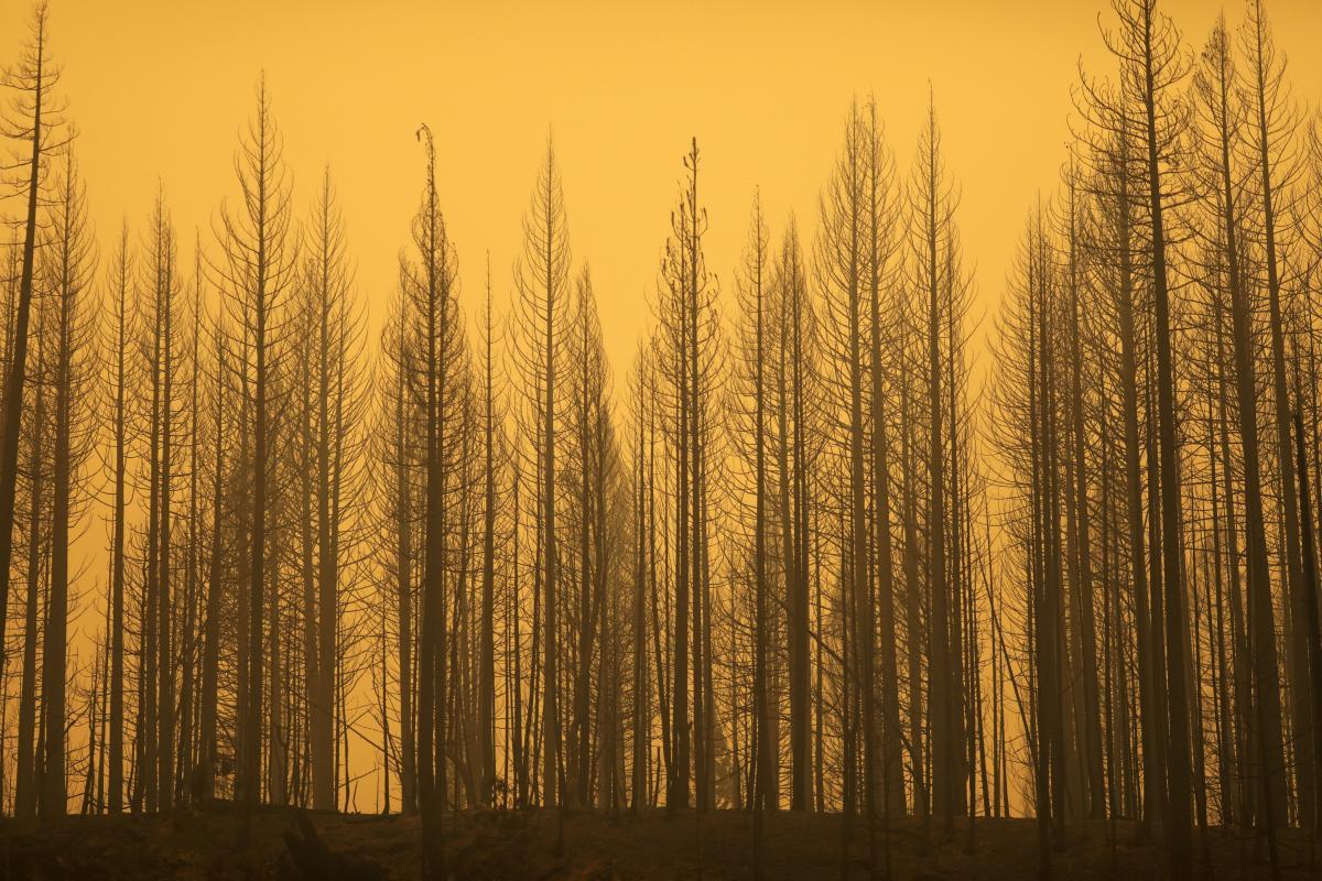 У США продовжують вирувати масштабні лісові пожежі / фото REUTERS