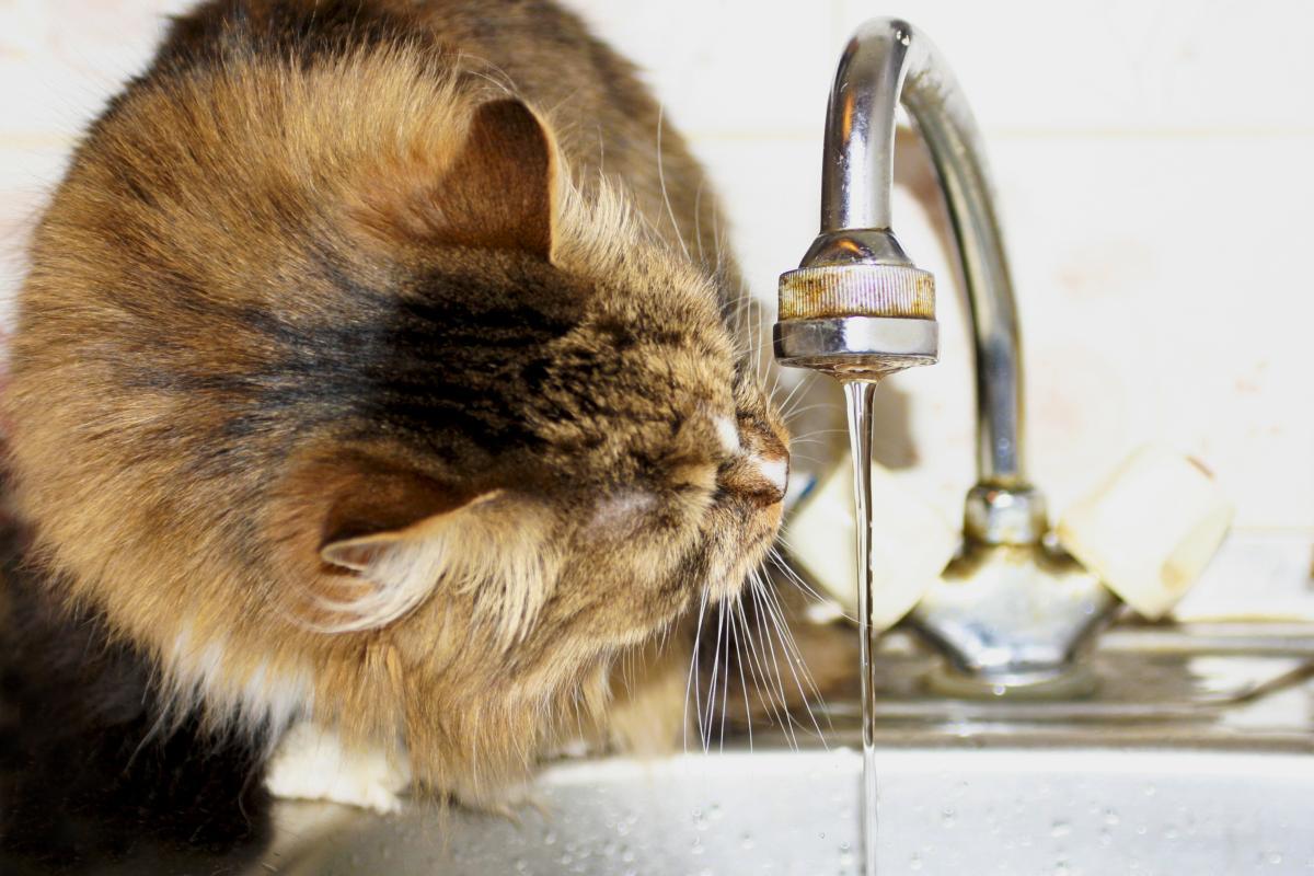 Воду из-под крана в столице можно пить, выяснили в лаборатории / фото ua.depositphotos.com
