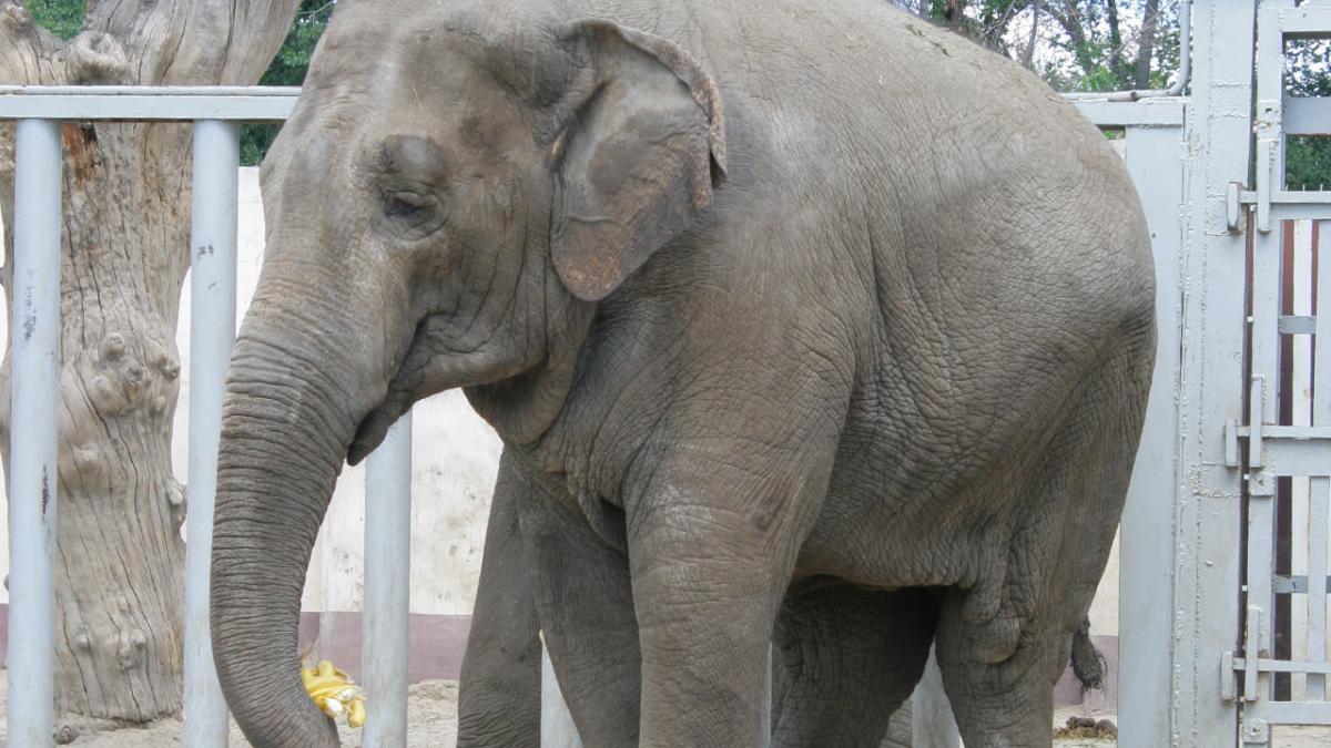 У харківському зоопарку померла слониха Тенді / фото facebook.com/zookharkov1895