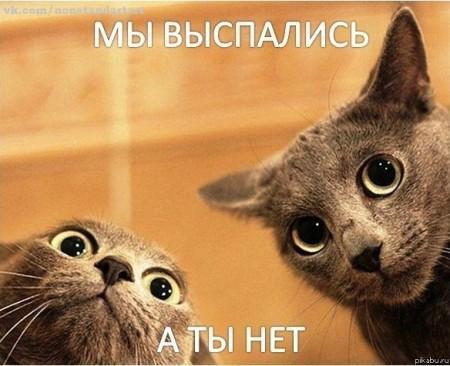 Прикольные открытки доброе утро / bipbap.ru