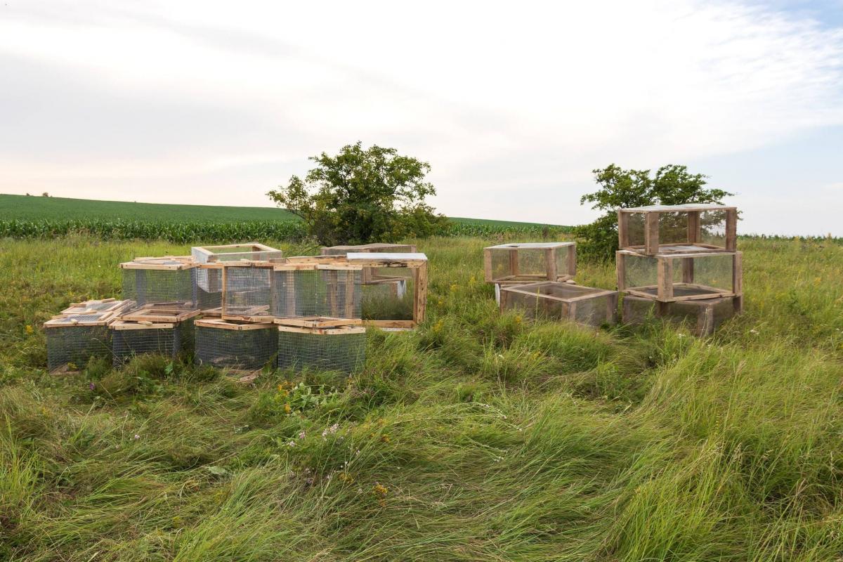 32 маленьких грызунов выпустили в дикую природу / фото facebook.com/zoo.kyiv.ua