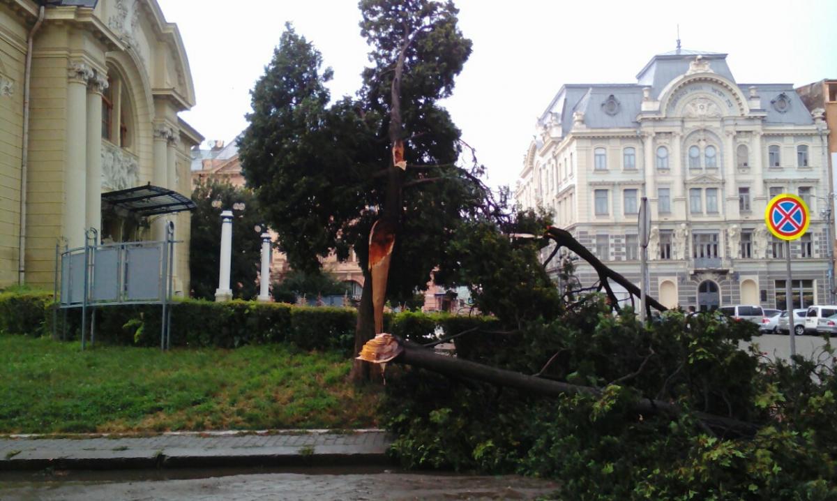 В результате урагана упали несколько десятков деревьев / фото УНИАН