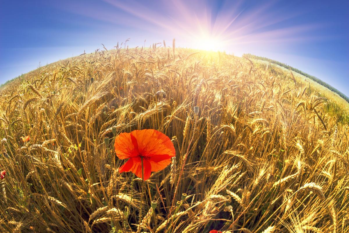 Выходные на День Независимости Украины / фотоdepositphotos.com