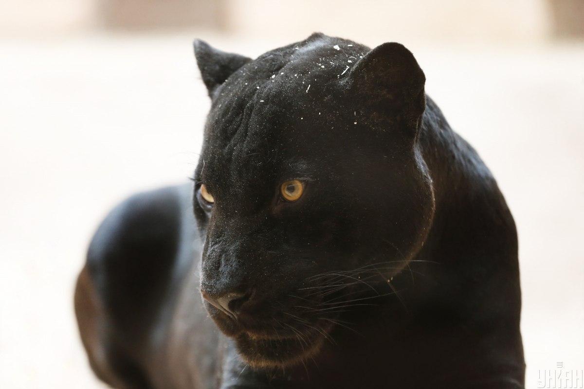 В частном зоопарке Ковалевки отказываются комментировать этот инцидент / фото - УНИАН