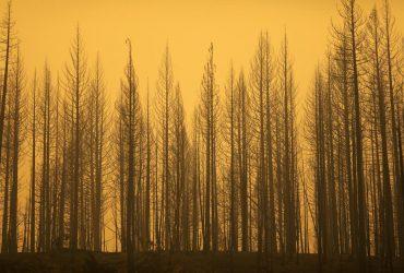 Лісові пожежі в США охопили 12 штатів: горить все західне узбережжя (фоторепортаж, відео)
