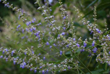 В сети показали роскошное цветение в киевском ботсаду (фото)