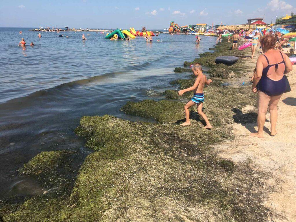 Орендарі пляжів Бердянська хочуть від міської влади допомоги у прибиранні водоростей / фото pro.berdiansk.biz