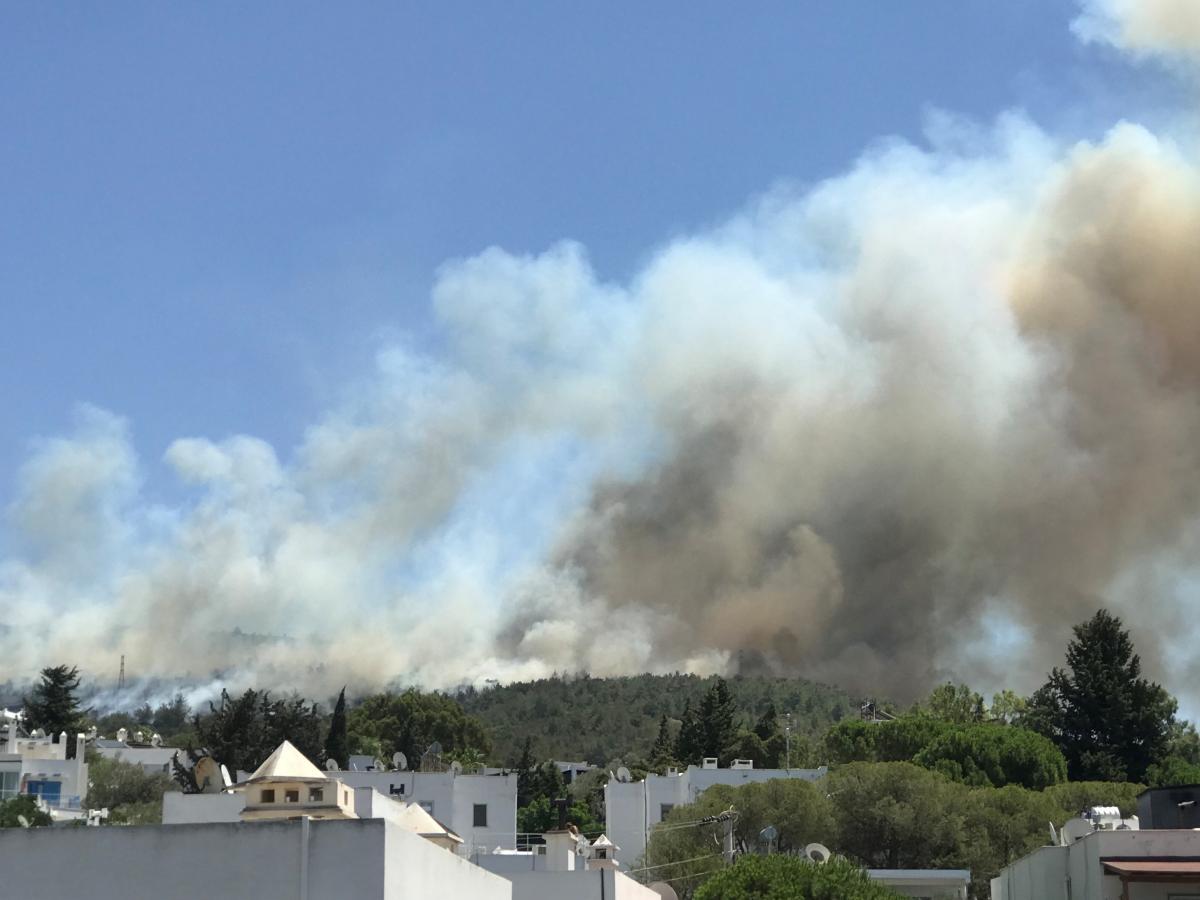 У Туреччині вируютьлісові пожежі / фото REUTERS