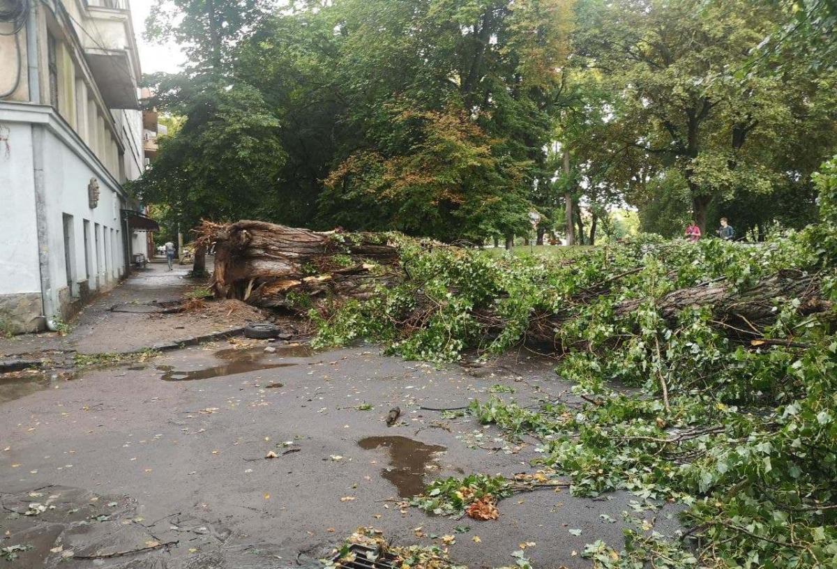 На Закарпатті вітер повали десятки дерев / фото zakarpattya.net.ua