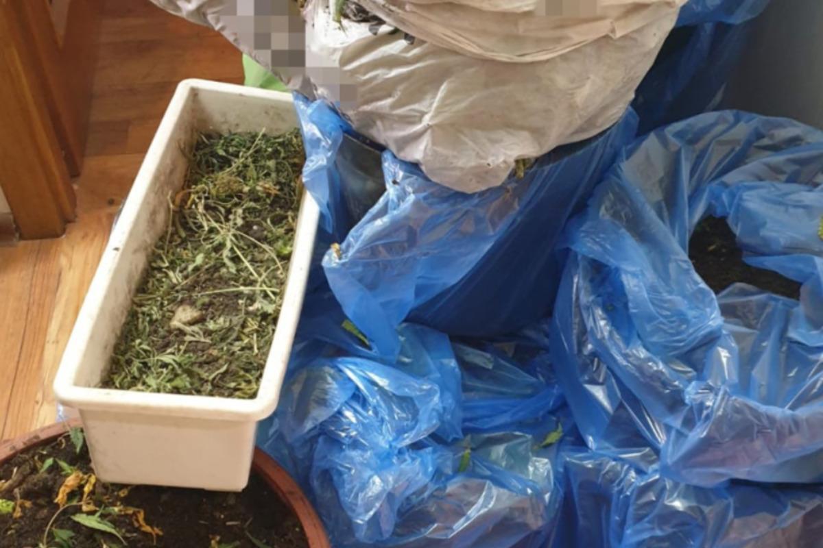 Правоохоронці знайшли у зловмисників марихуану та обладнання для її вирощування / ssu.gov.ua