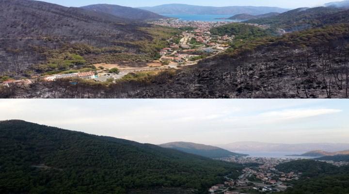 В Турции продолжают гореть леса / фото BirGün