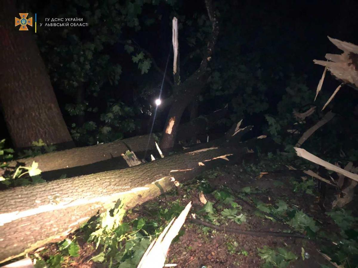 Дерево могло бути зруйноване блискавкою / фото ДСНС