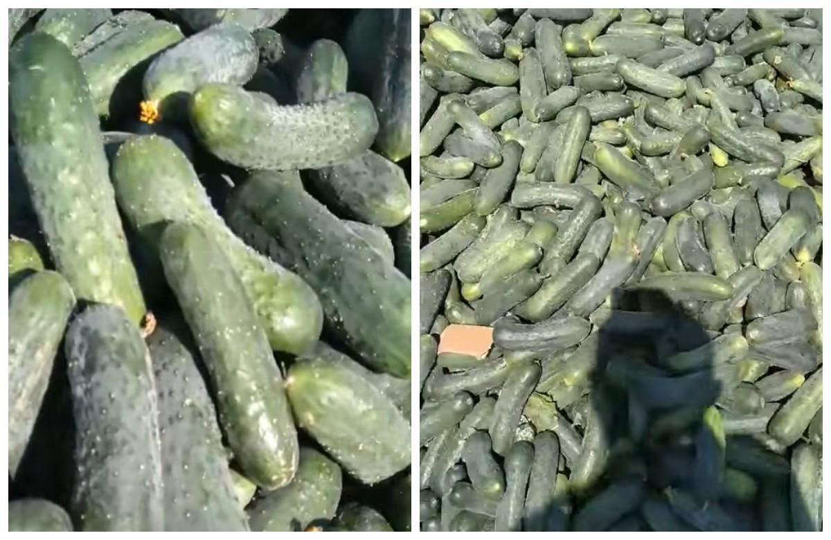 Фермер избавился от сотни килограмм своего урожая / фото - facebook.com/100012766391950
