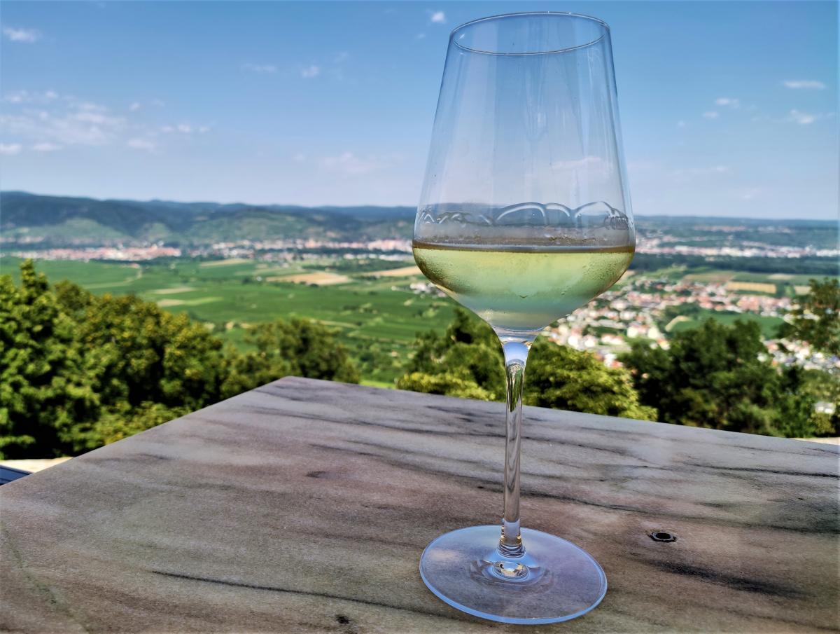 Те саме вино Grüner Veltliner від ченців у Вахау / фото Марина Григоренко