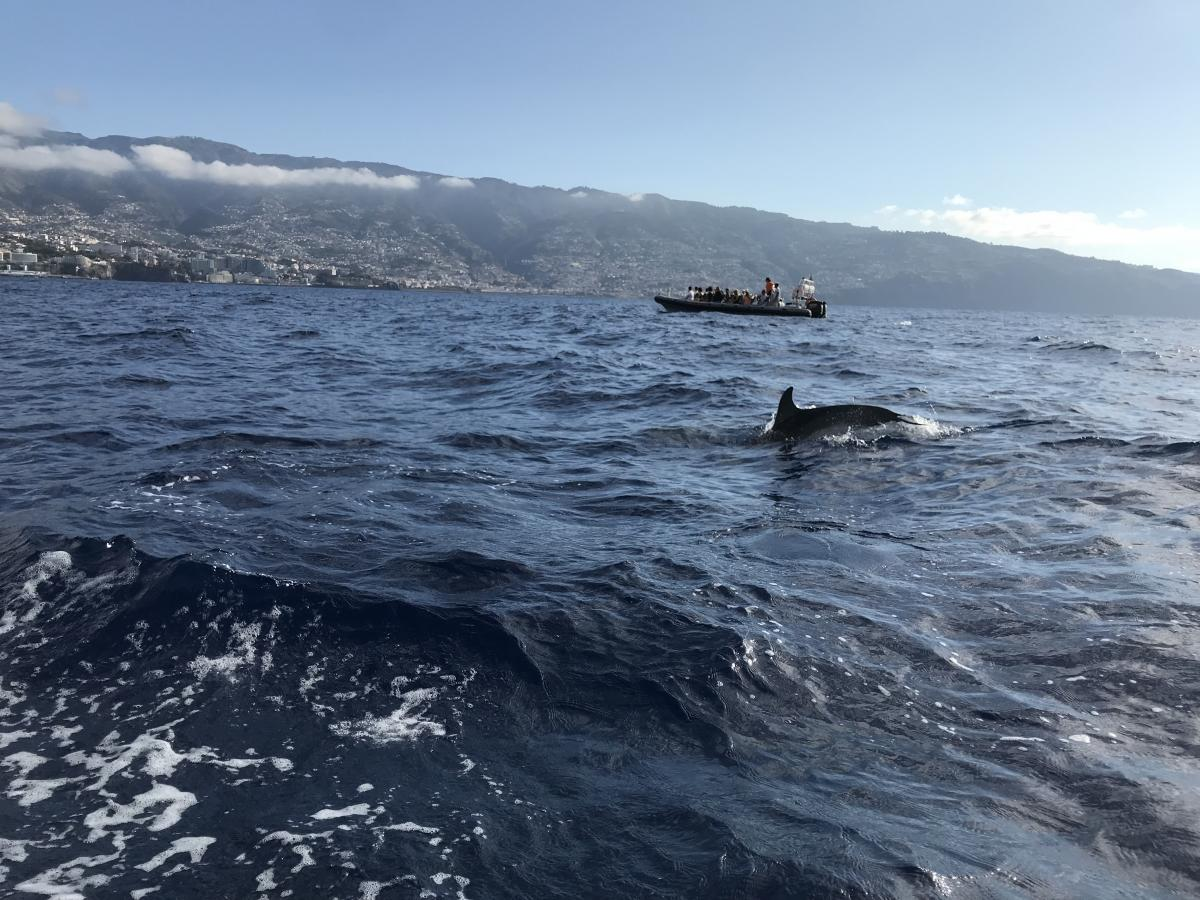 Пара дельфинов пронеслась в метре от лодки / фото Игорь Орел
