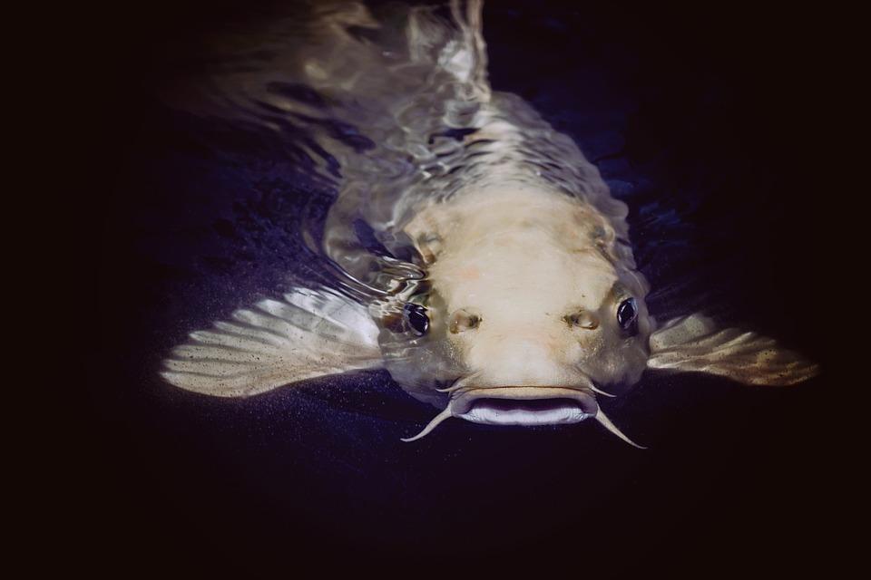К чему снится рыба / pixabay.com