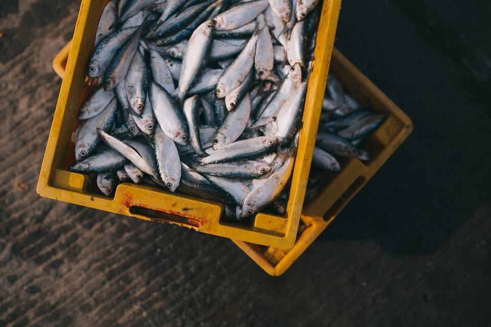 Что означает сон, в котором приснилась рыба / pixabay.com