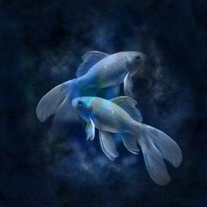 Рыбы попали в список завидных невест / pixabay.com