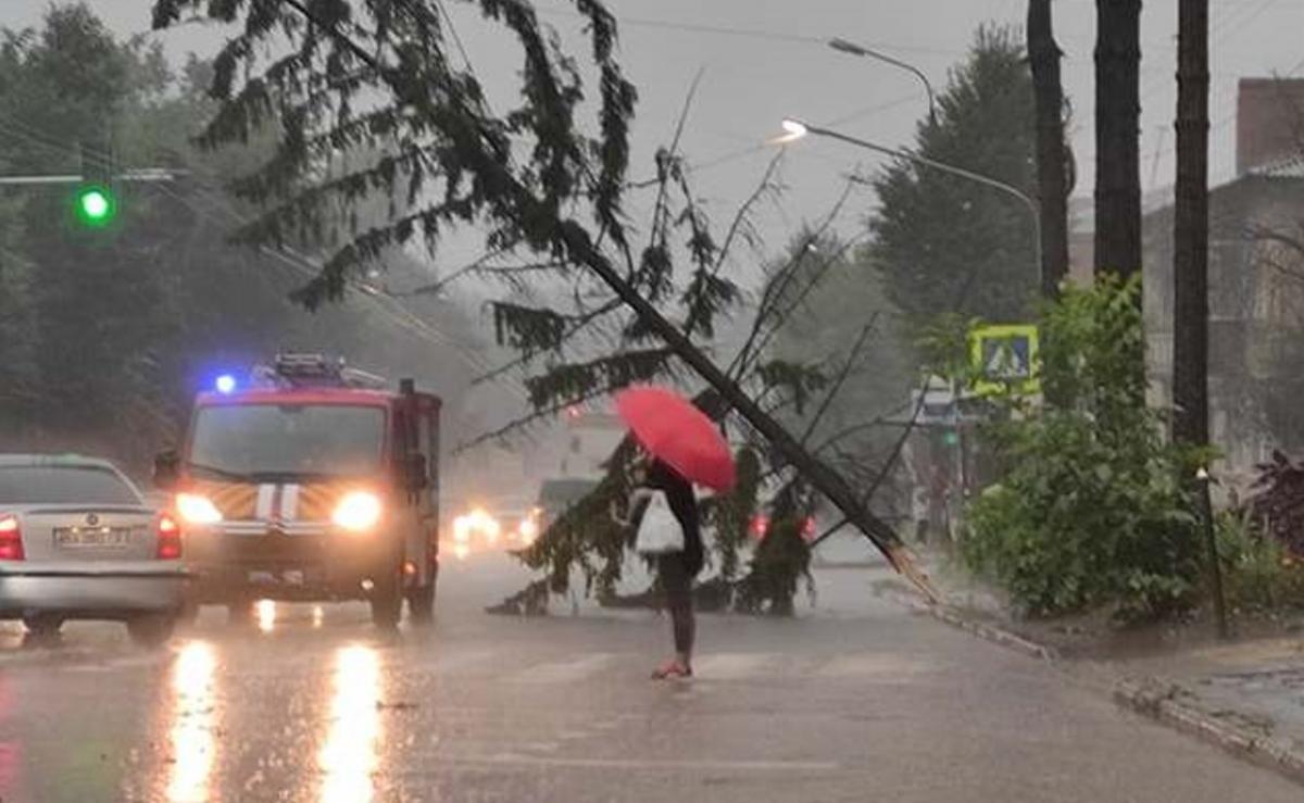 Негода у Хмельницькому повалила багато дерев / фото Олександр Хоменко