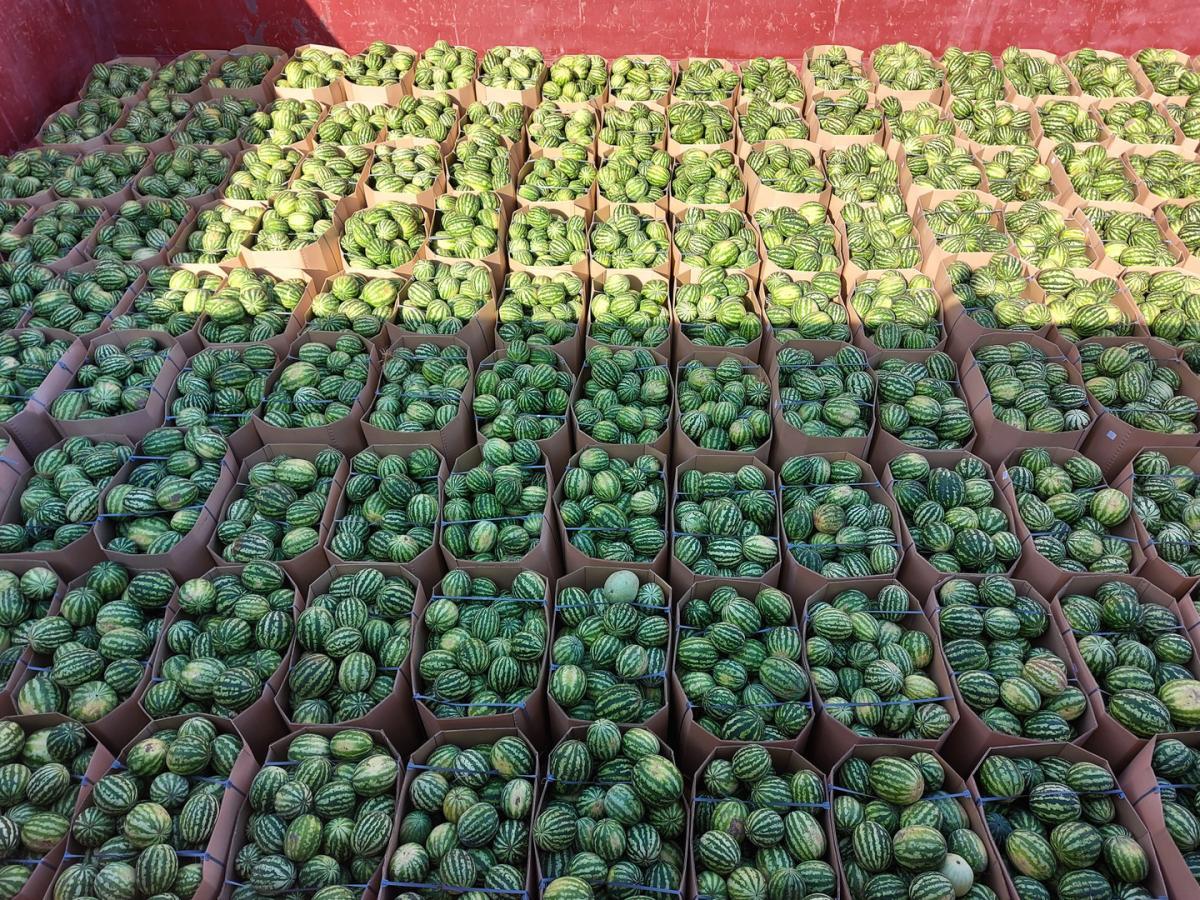 В 2020 году Украина вернулась в число 25 крупнейших мировых экспортёров арбузов, однако в текущем году экспорт обходится дороже / фото nibulon.com