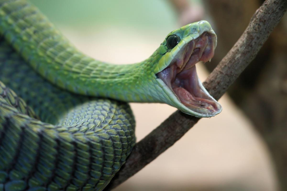 Что означает сон, в котором приснилась змея / depositphotos.com