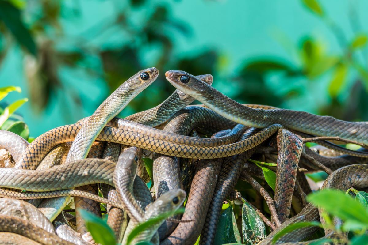 Что означает увидеть много змей во сне / depositphotos.com