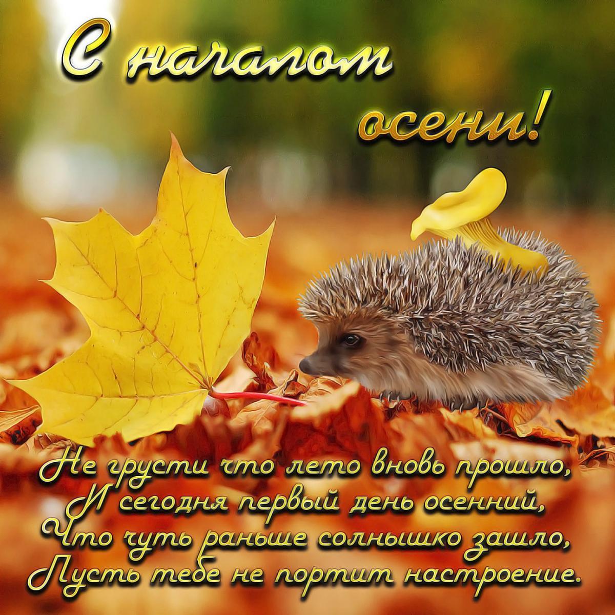 Перший день осені / фото bipbap.ru