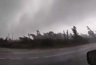 Туристы случайно сняли, как мощный ураган с корнем вырывал десятки деревьев (видео)