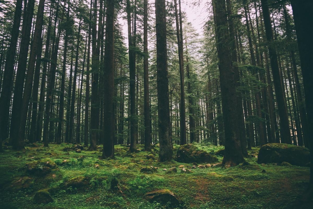 У Держлісагентстві вважають, що в Україні за три роки можна висадити мільярд дерев/фото depositphotos.com