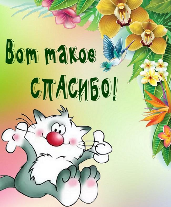 Дякуємо за привітання листівки / фото klike.net